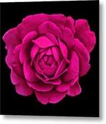 Dramatic Hot Pink Rose Portrait Metal Print
