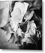 Dramatic Hydrangea In Black And White Metal Print