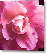 Dramatic Pink Begonia Floral Metal Print by Jennie Marie Schell