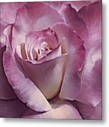 Dramatic Plum Rose Flower Metal Print
