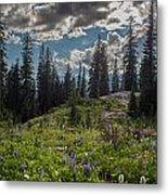 Dramatic Rainier Flower Meadows Metal Print