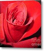 Dramatic Red Rose  Metal Print