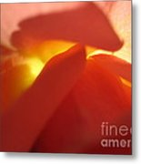 Glowing Orange Rose 2 Metal Print