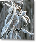 Draped In Frost Metal Print