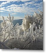 Draped In Icy Beauty Metal Print