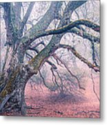 Dream Oak II Color 2 Metal Print