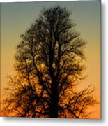 Dream Tree At Sunset Metal Print