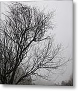 Dreamer Tree Metal Print