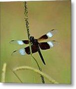 Dreaming Dragonfly Metal Print