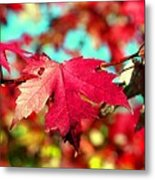 Dreaming Of Maple Jewels Metal Print