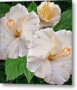 Dreamy Blooms - White Hibiscus Metal Print