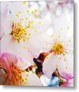 Dreamy Blossom Metal Print