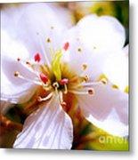 Dreamy Cherry Blossom Metal Print