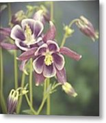 Dreamy Columbine Flowers Metal Print by Cathie Tyler