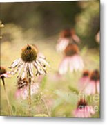 Dreamy Coneflowers Metal Print