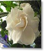 Dreamy Creamy Gardenia Metal Print