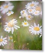 Dreamy Daisies On Summer Meadow Metal Print