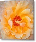 Dreamy Orange Rose Metal Print