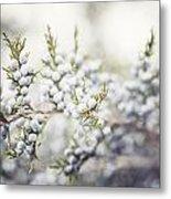 Dreamy Pastel Juniper Berries Metal Print