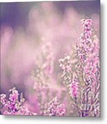 Dreamy Pink Heather Metal Print