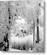 Dreamy Surreal Black White Infrared Arbor Metal Print