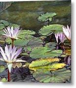 Dreamy  Water Lillies Metal Print