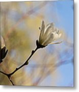 Dreamy Wild Magnolia In The Forest Metal Print