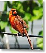 Dressed In Red Metal Print