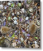 Dried Flower Seeds Metal Print