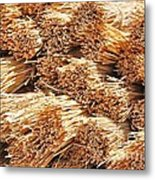 Dried Grass Metal Print