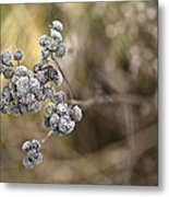 Dried Out Metal Print