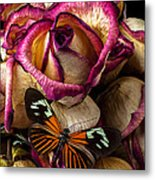 Dried Rose And Butterfly Metal Print