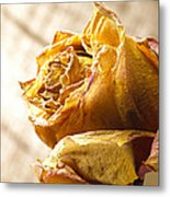 Dried Yellow Rose Metal Print