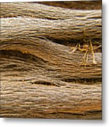 Driftwood 1 Metal Print by Adam Romanowicz