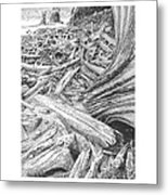 Critter In The Driftwood  Metal Print