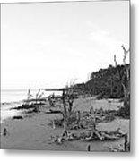 Driftwood Beach Metal Print by Thomas Leon