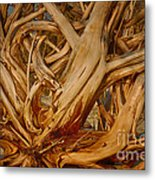 Driftwood Jungle Botany Bay Metal Print