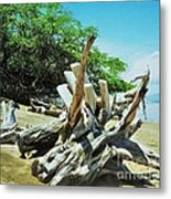Driftwood On A Maui Beach Metal Print