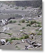 Driftwood On The Beach Metal Print