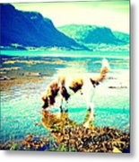 Springer Spaniel Drinking Water From The Big Blue Sea  Metal Print