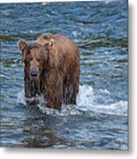 Dripping Grizzly Metal Print