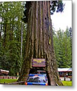 Drive Through Redwood Tree Metal Print