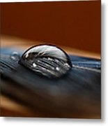 Drop On A Bluejay Feather Metal Print