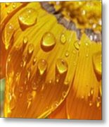 Droplets Of Gold Metal Print