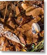 Dry Acorn And Oak Leaves Metal Print