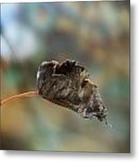 Dry Autumn Leaf On A Branch Metal Print