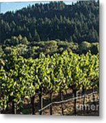 Dry Creek Road Vineyard Metal Print