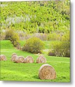 Dry Hay Bales In Spring Farm Field Maine Metal Print