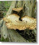 Dryads Saddle Bracket Fungi - Polyporus Squamosus Metal Print