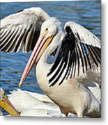 Drying Off In Style Metal Print